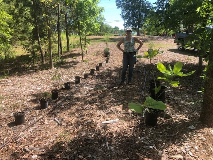 native-tree-sampling-bank-all-saints-concord-2020_574