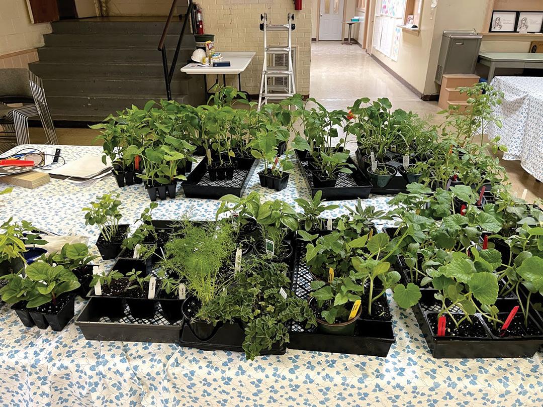 web-seedlings_295